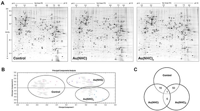 Proteomic profile of Au(NHC) and Au(NHC)2-treated A2780 cells.