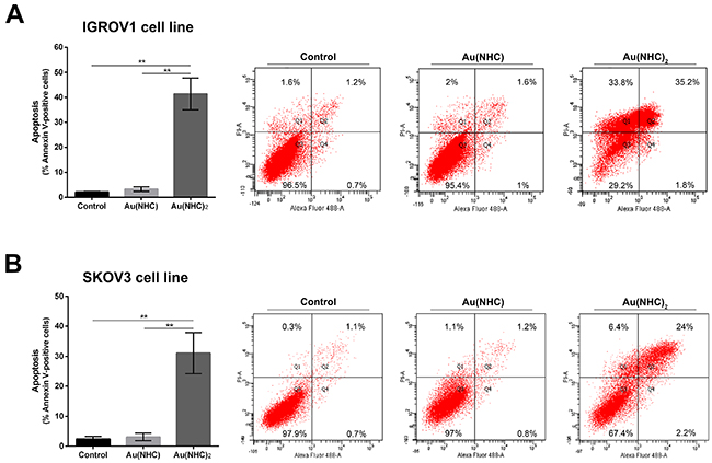 Apoptosis induction in IGROV1 and SKOV3 ovarian cancer cells.