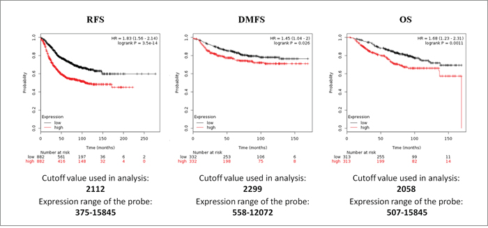 Survival analyses of S100 family members in breast cancer obtained from the Kaplan-Meier Plotter database.