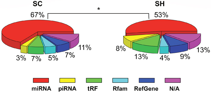 sncRNA distribution in SC and SH cells.