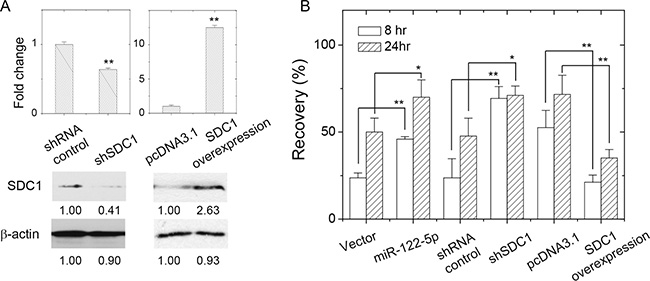 SDC1 expression level affected breast cancer cell mobility.