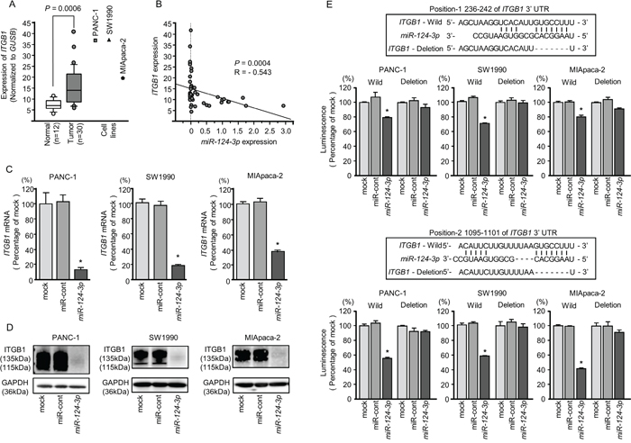 Direct regulation of ITGB1 by miR-124-3p in PDAC cell lines.