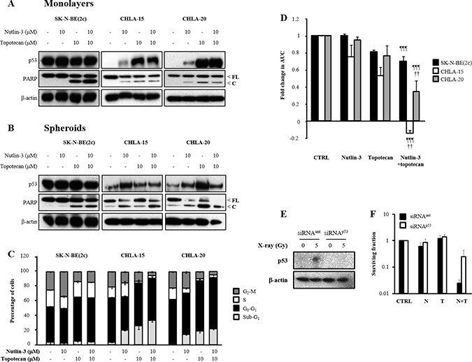The effect of nutlin-3 and topotecan alone or in combination on the induction of p53 signalling, cell cycle arrest and spheroid growth delay.