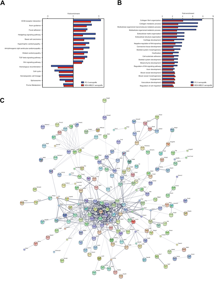 KEGG pathways, GO terms and protein interaction network of the osteolytic stroma response.