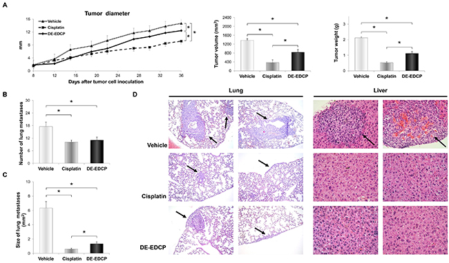 DE-EDCP treatment of mice bearing breast cancer inhibits tumor growth and progression.