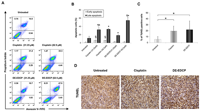 DE-EDCP enhances tumor cell apoptosis in murine breast cancer.