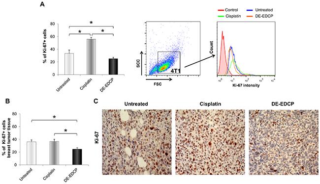 DE-EDCP treatment attenuates expression of Ki-67 in murine breast cancer.