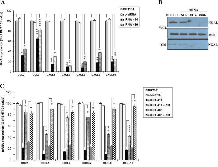 NGAL influences chemokines expression in BHT101 cells.