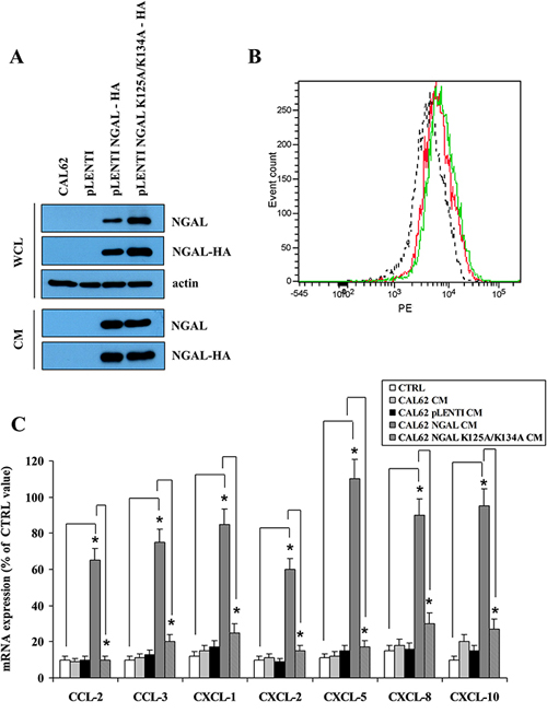 A mutant form of NGAL unable to bind siderophores did not restore chemokines expression.