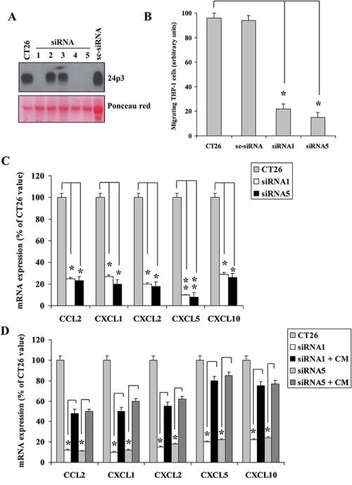 Mouse 24p3 recapitulates human NGAL behaviour.