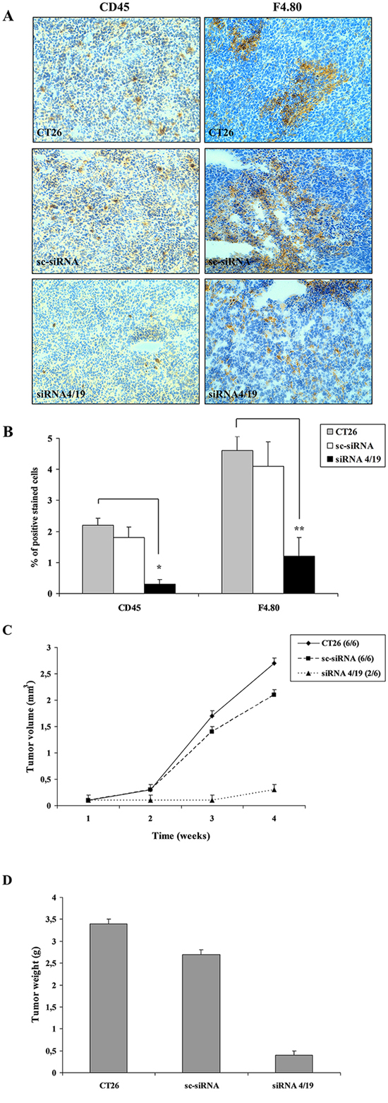 In vivo analysis of leukocytes infiltrate in tumor microenvironment of mice xenografts.