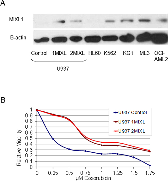 MIXL1 expression confers decreased sensitivity to doxorubicin in AML cells.