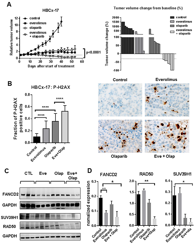 Anti-tumour activity of everolimus and olaparib in a BRCA2-mutated basal-like breast cancer.