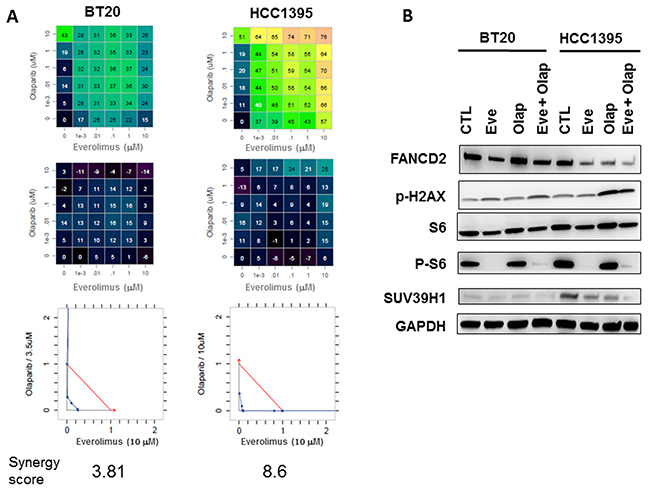 In vitro evaluation of everolimus and olaparib combinations in BT20 and HCC1395 breast cancer cell lines.