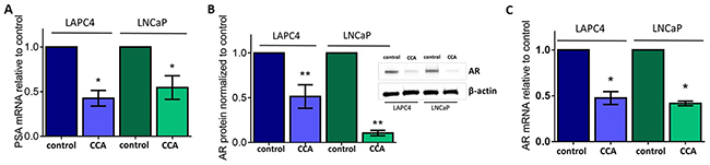 V-ATPase inhibition represses androgen receptor in prostate cancer cell lines.