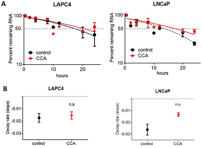 Androgen receptor mRNA degradation is not stimulated by V-ATPase inhibition.