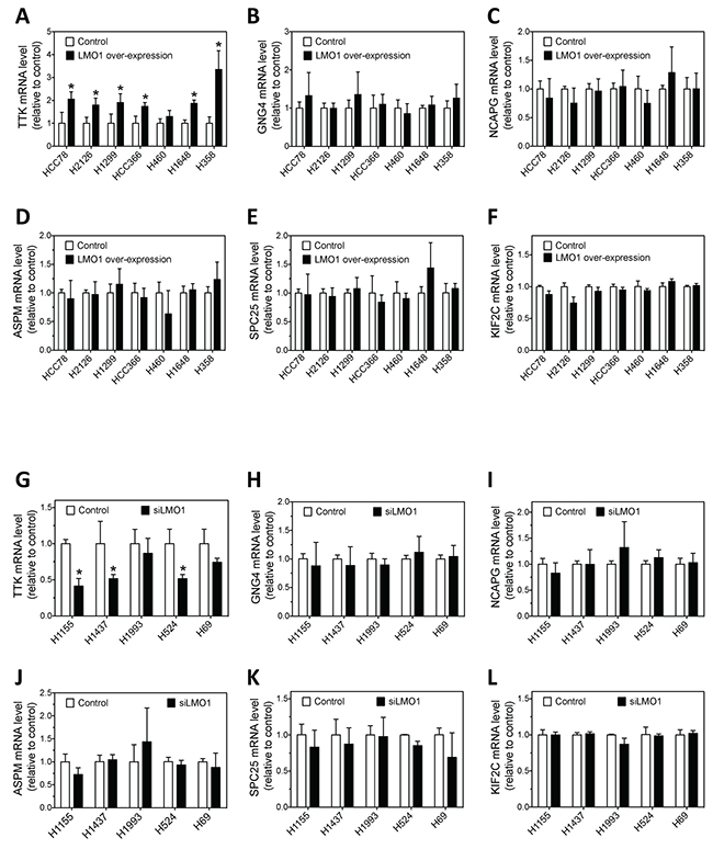 Effect of LMO1 overexpression and knockdown on mRNA expression levels of the six candidate genes in lung cancer cells.