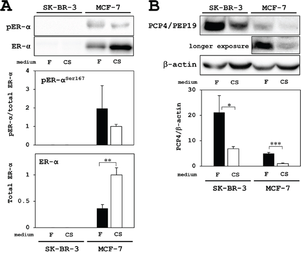 Western blotting analysis for PCP4/PEP19 and ER expression in MCF-7 and SK-BR-3 cells.