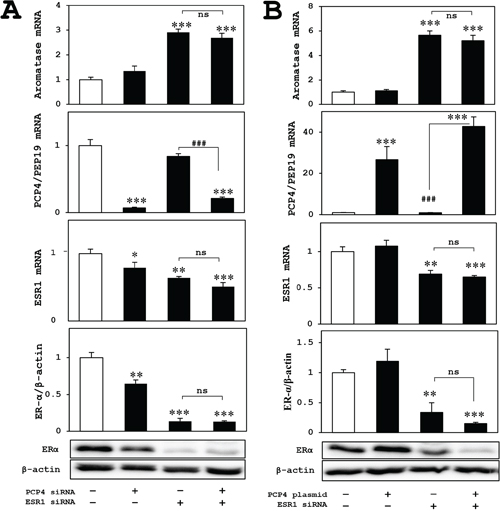 Effects of ER knockdown on aromatase expression in MCF-7 cells after PCP4/PEP19 knockdown and overexpression.