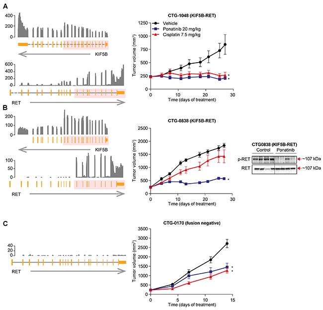 Anti-tumor activity of ponatinib in KIF5B-RET NSCLC PDX models.