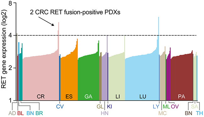 Identification of RET rearrangements in 2 CRC models.