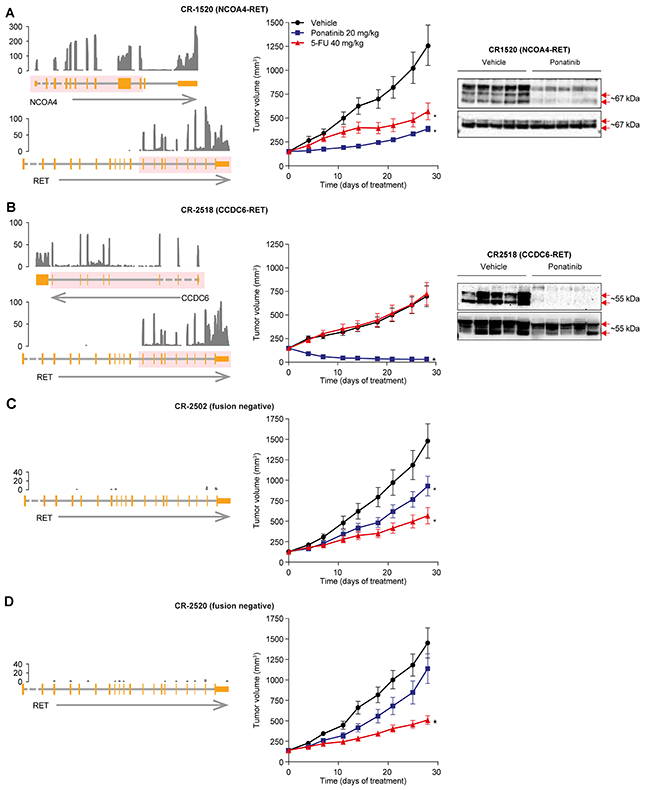 Anti-tumor activity of ponatinib in CRC PDX models.