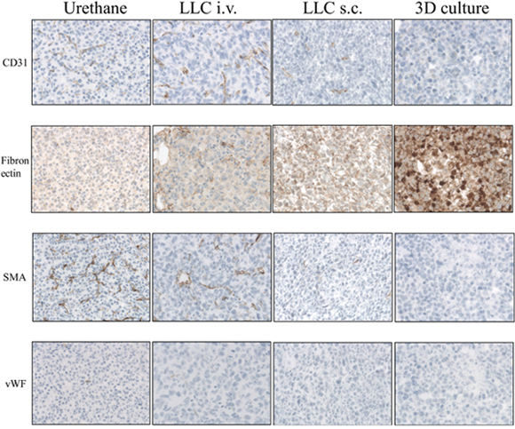 Immunohistological analysis of animal lung cancer models (x200 magnification for Urethane, LLC i.v., LLC s.c. and for 3D primary cell culture models): Urethane, LLC i.v., LLC s.c. induced lung tumor samples and 3D primary cell culture model spheroids were stained by antibodies of CD31, Fibronectin, SMA and vWF.