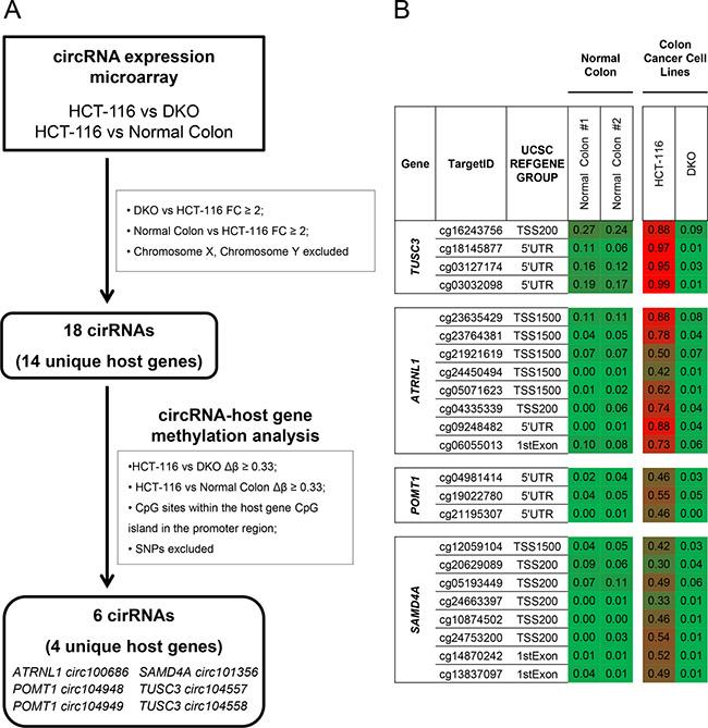 Screening for CpG island hypermethylation-associated silencing of circular RNAs in cancer cells.