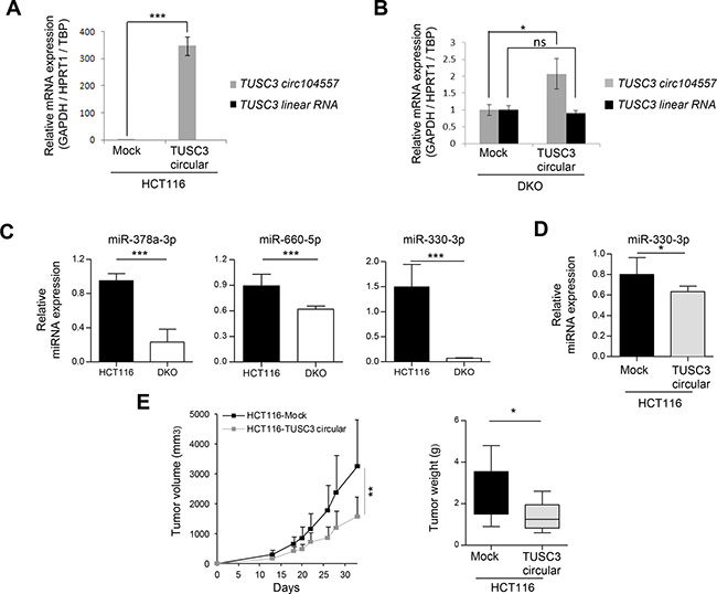 circRNA effects on linear transcripts, miRNAs and tumor growth.
