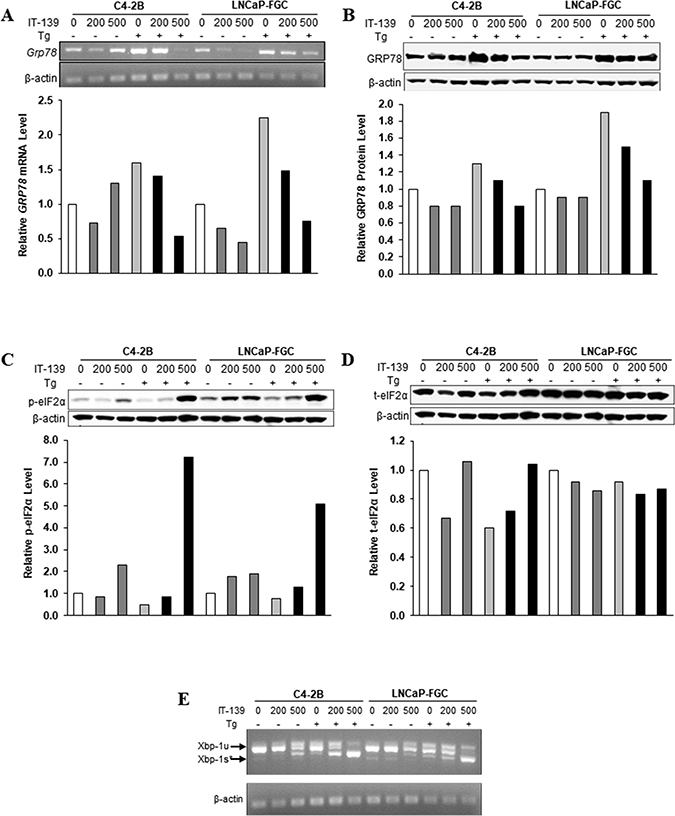 IT-139 specifically suppresses stress induction of GRP78 mRNA and protein.
