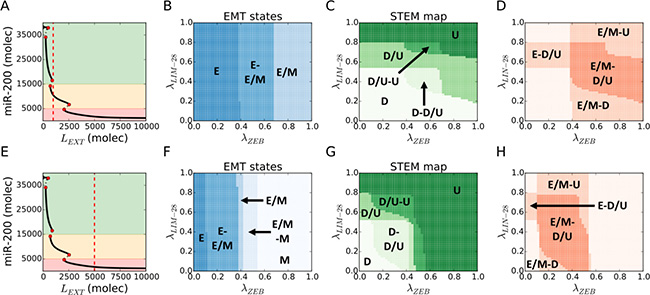 Hybrid E/M and D/U (stem-like) phenotypes overlap over a large variation of EMT-STEM circuit coupling strength.