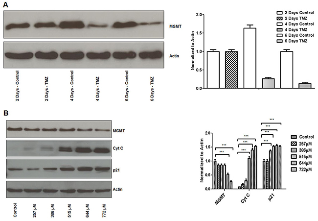 TMZ inhibits MGMT expression and induces p21 and cytochrome C expression in breast cancer cells.