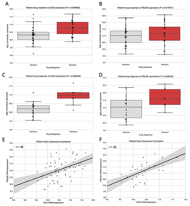 CAD and POLD2 association with chemotherapy response in bladder cancer patients.