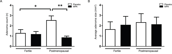 MPA protects from adenoma formation in VCD treated mice.
