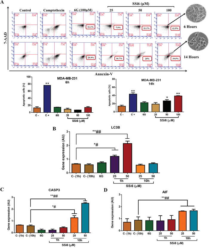 Effects of SSi6 and 6G in apoptosis and expression of apoptosis- and autophagy-related genes in TNBC cells.