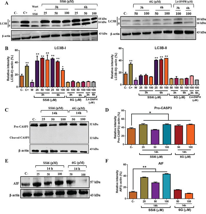 Effects of SSi6, 6G and 2,4-DNPH on the levels of apoptosis- and autophagy-related proteins in TNBC cells.