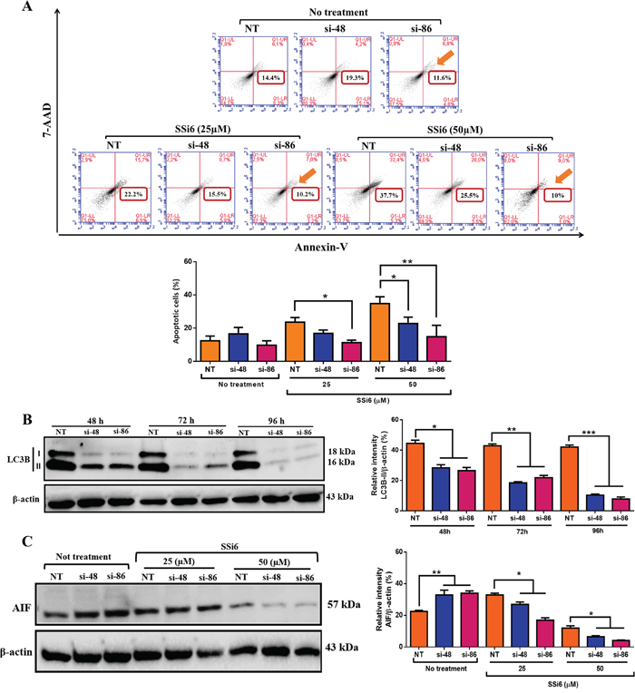 LC3B knockdown attenuates SSi6 apoptotic effects in TNBC cells.