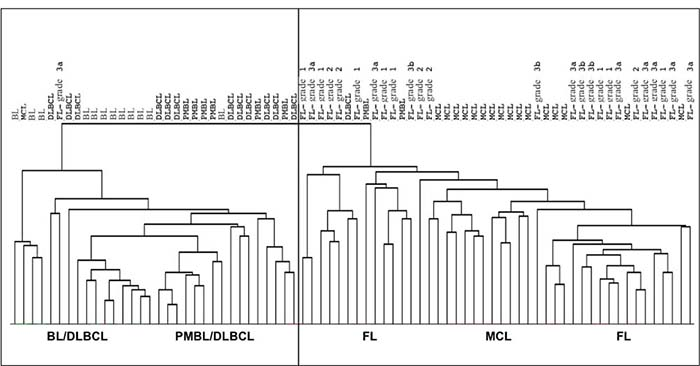 Distribution of 76 samples belonging to BL, DLBCL, PMBL, MCL and FL according to their miRNA profile.