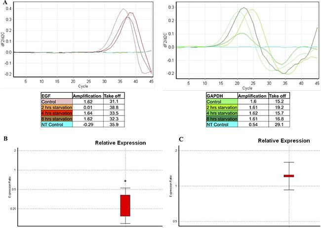 EGF gene transcription analysis evaluated in starved samples.