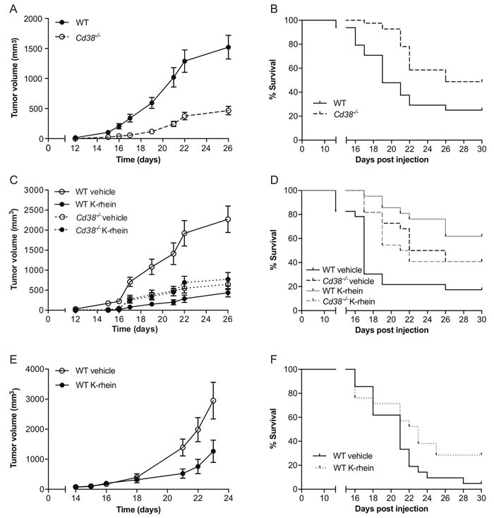 Targeting CD38 inhibits B16F10 melanoma progression.