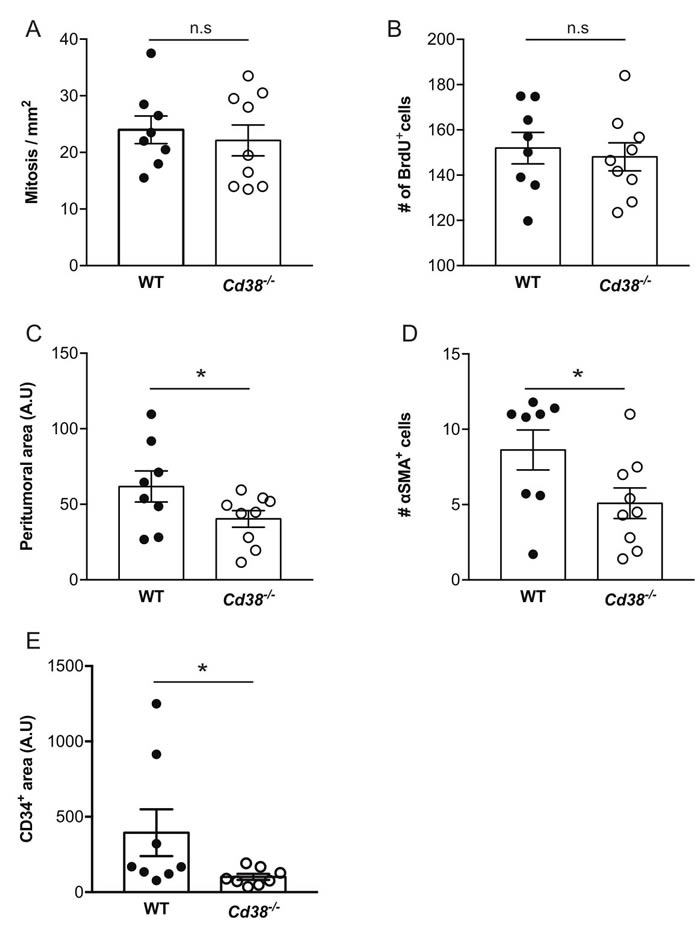 The effect of loss of CD38 on the properties of early stage and size-matched tumors.