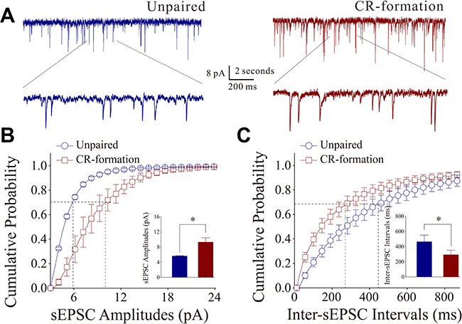 Excitatory synaptic transmission on barrel cortical pyramidal neurons increases after multisensory associative leaning.