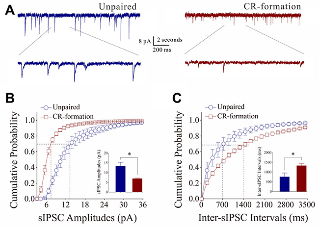 Inhibitory synaptic transmission on barrel cortical pyramidal neurons decreases after multisensory associative leaning.