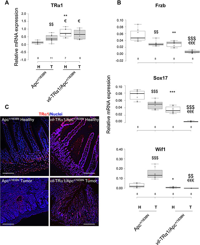 Inverse correlation between TRα1 and Wnt antagonists.