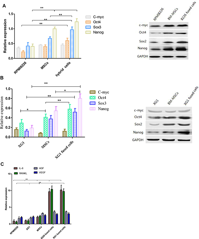 The expression of stemness genes and cytokines was analyzed before and after cell fusion.