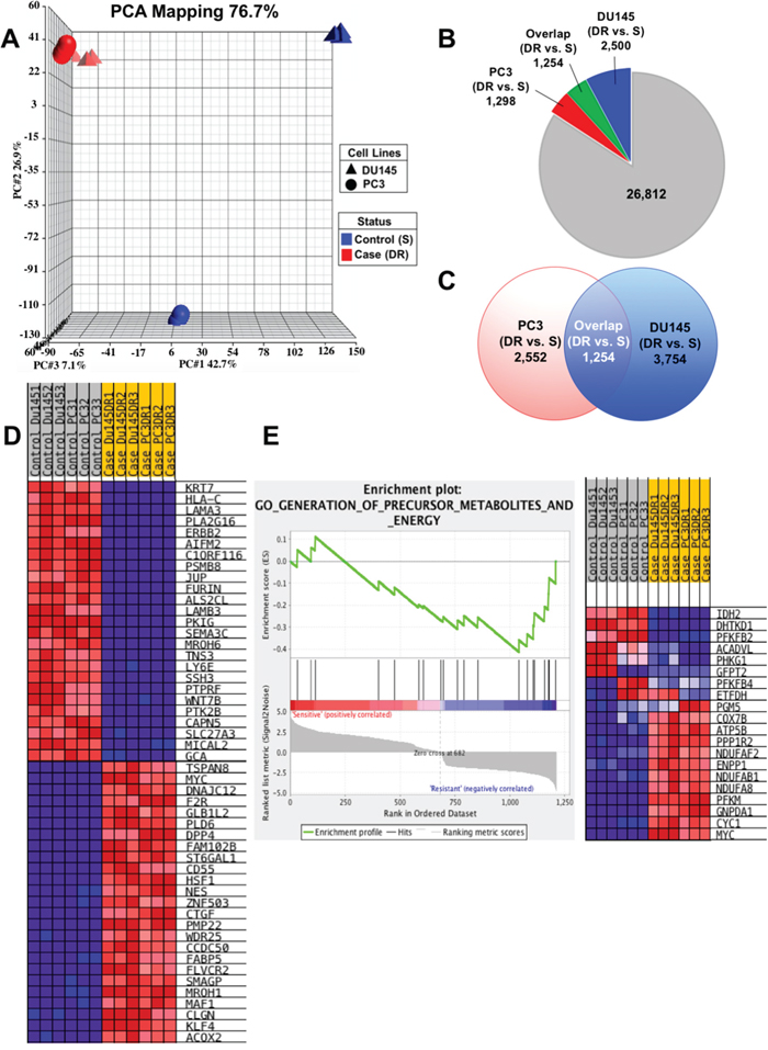 Gene expression profiling analysis reveals upregulation of CSC-associated genes.