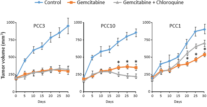 PCCs xenografts were treated with vehicle or gemcitabine alone or in combination with Chloroquine (50 mg/kg/day) after tumors attain a volume of 200 mm3.