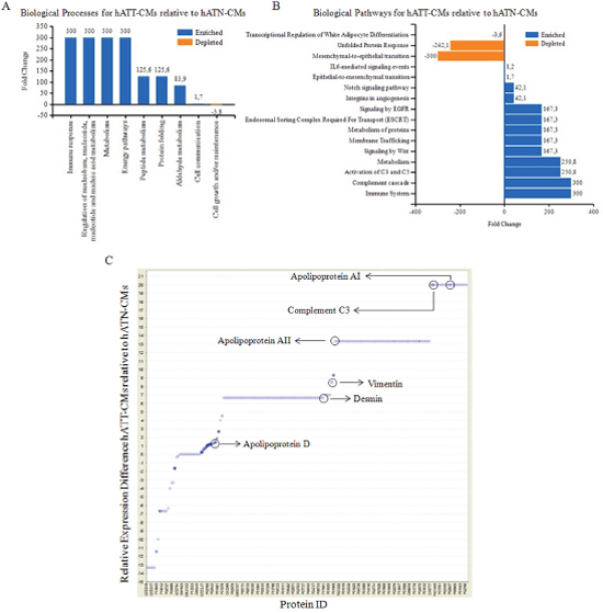 Analysis of biological processes/pathways present in the secretome of hATN and hATT.