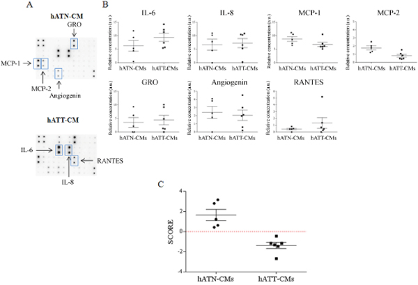 IL-6, MCP-2 and GRO as key cytokines that differentiate the secretome of hATT from hATN.