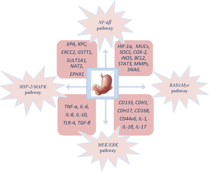 Molecular pathogenesis of GC patient's infected with H. pylori.